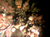 Community of anemones, sea stars, brittle stars, mussels and hydroids in the North Sea