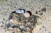 Porifera Spherical