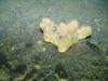 Cod and sponge