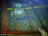 Atlantic wolfish